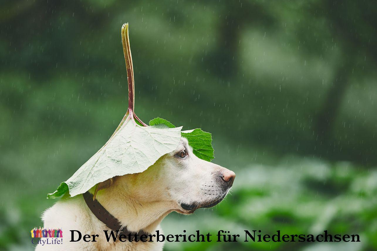 Guten Morgen Niedersachsen Lustigebilder Lustig Regen
