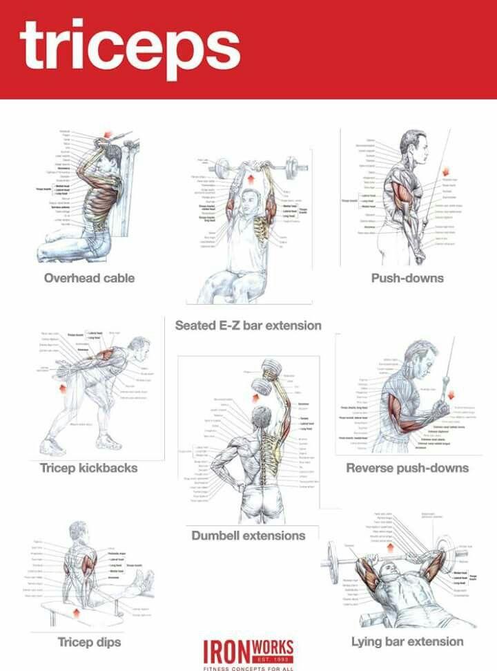Pin de Anthony Fischer en bodybuilding | Pinterest | Ejercicios ...