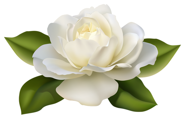 beautiful white rose with leaves png image pinterest rh pinterest com white rose clipart free white rose pictures clip art