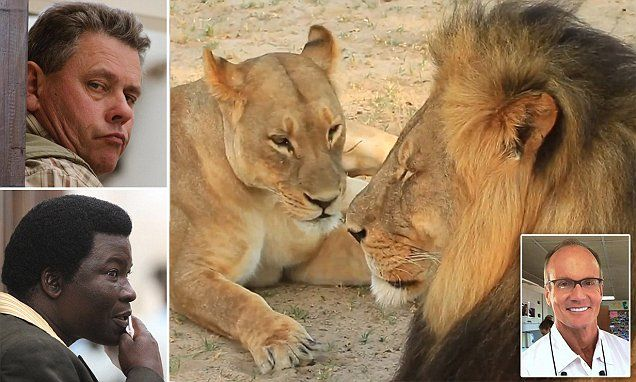 Cecil the lion's last hours and Walter Palmer's  vanity | Daily Mail Online
