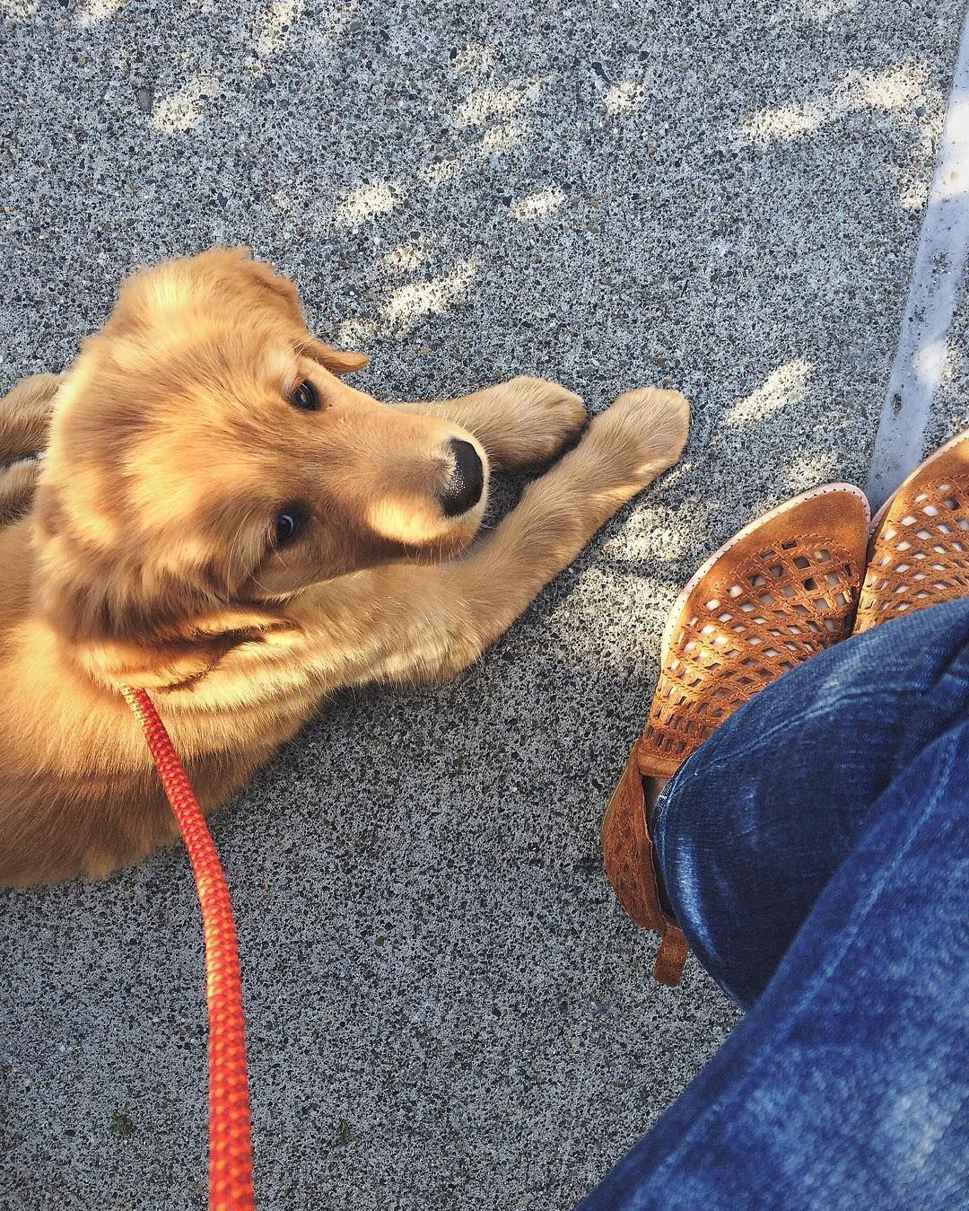 """Lucy Golden Retriever Puppy on Instagram """"Perfect sunny"""