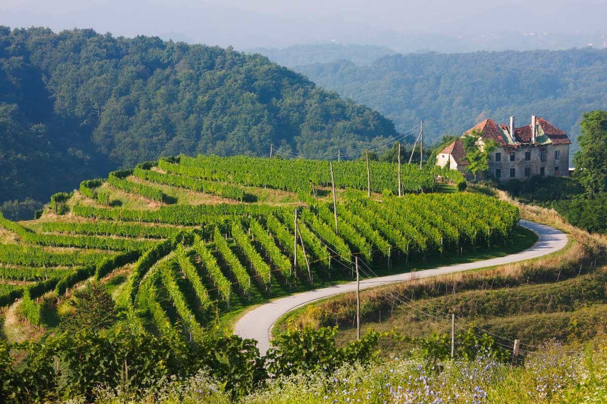Ptuj (Eslovenia) (pineado por @OrgulloWine)