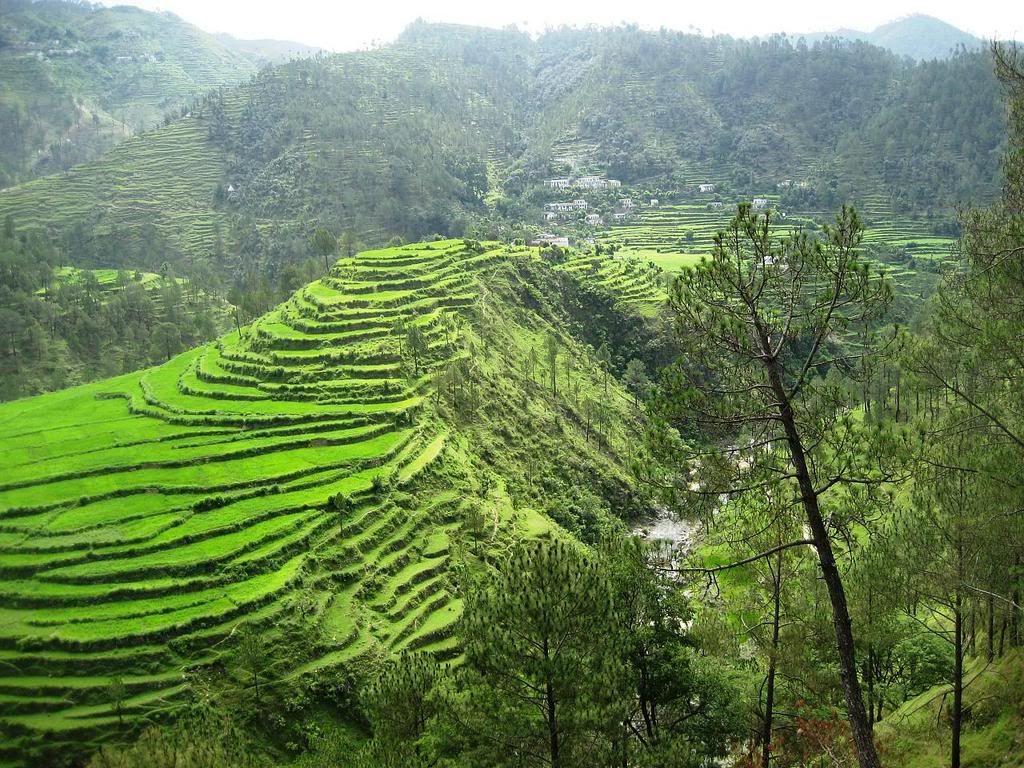 Hd wallpaper uttarakhand - Terraced Fields Almora Uttarakhand