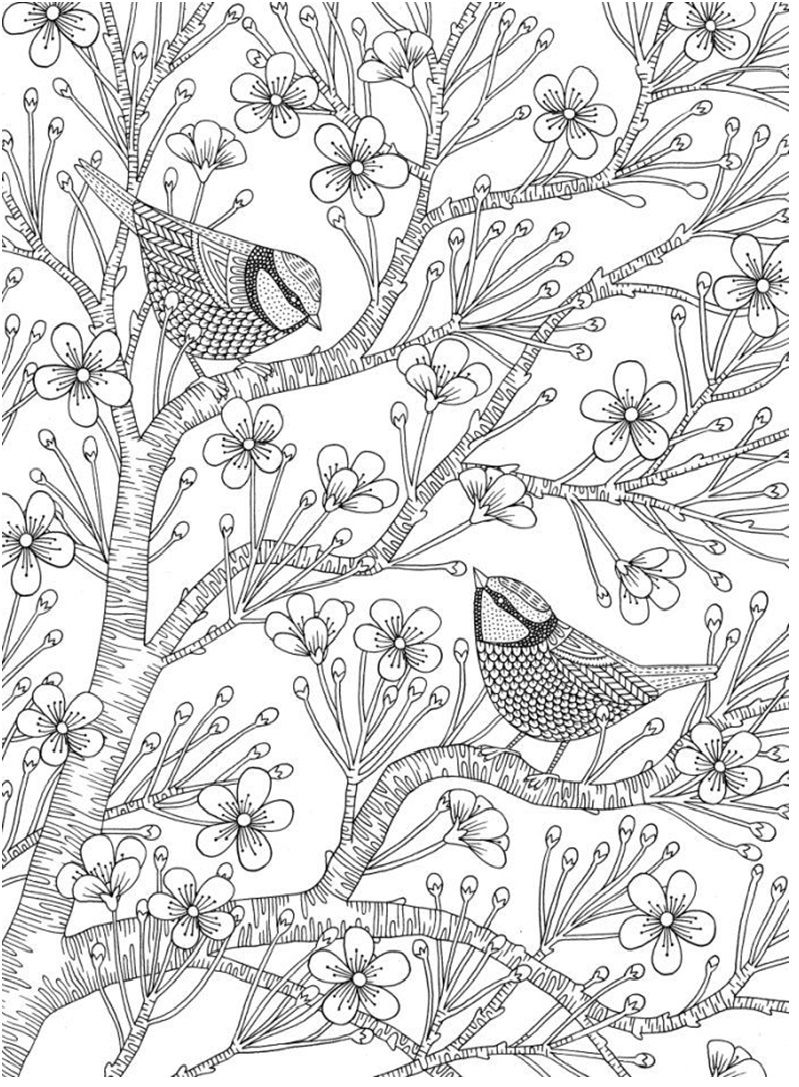 Birds And Apple Blossoms Coloring Page Bird Coloring Pages Coloring Books Coloring Pages