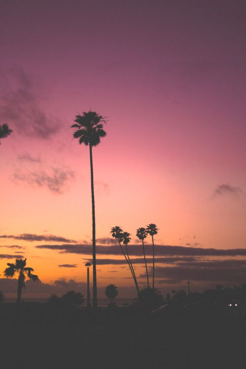 Looks Similar To What Our Sunsets Look Like Her In Palm Springs Trees Are The Essence Of Beauty