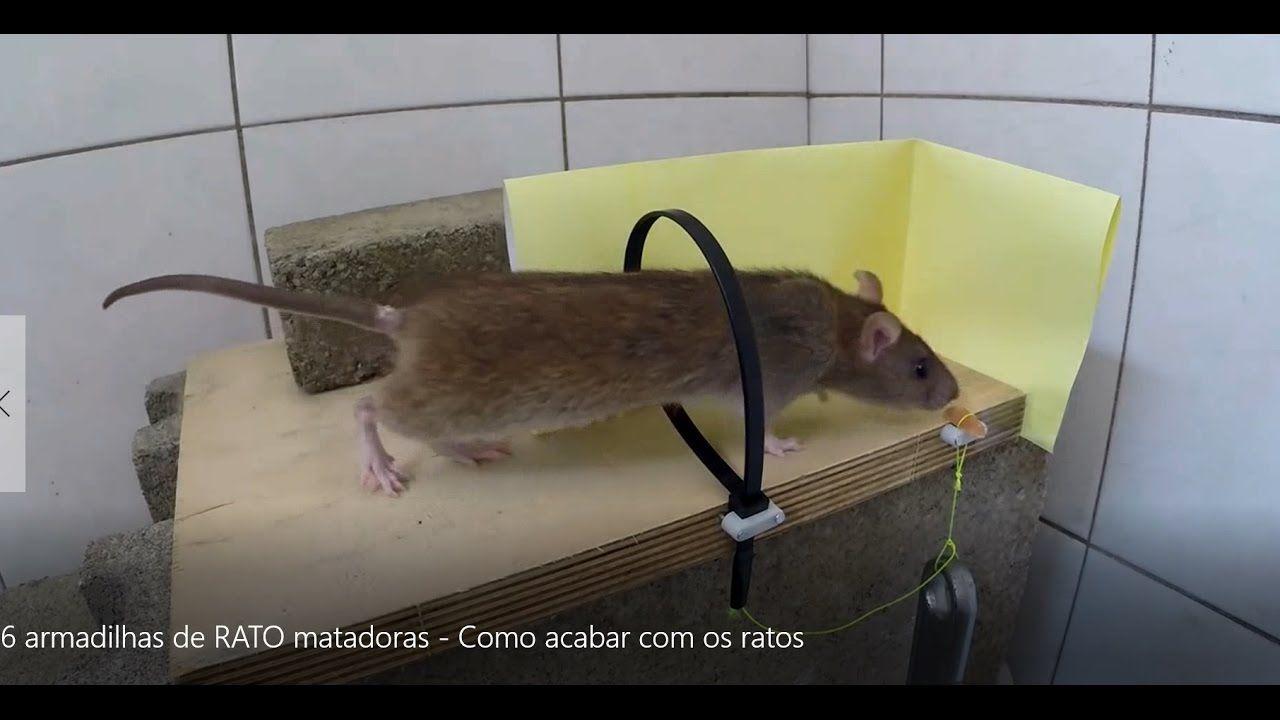 6 armadilhas de RATO matadoras - Como acabar com os ratos