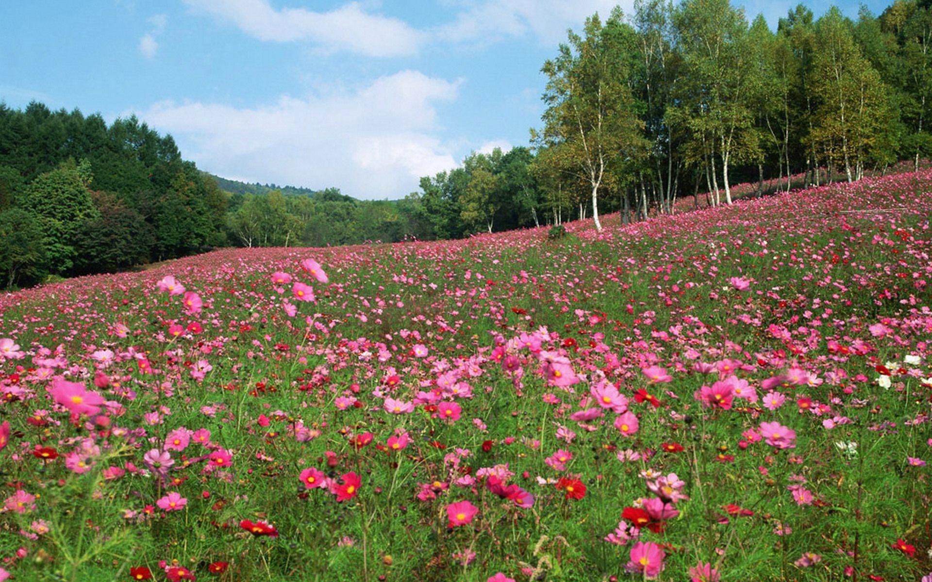 Spring Flower Meadows Pink Flower Meadow Pink Flower Meadow