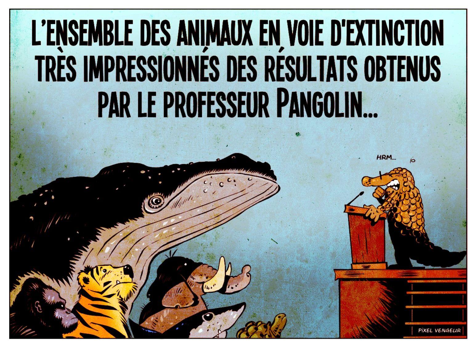 Le professeur Pangolin a frappé en 2020 | Meilleur blague, Blague, Humour