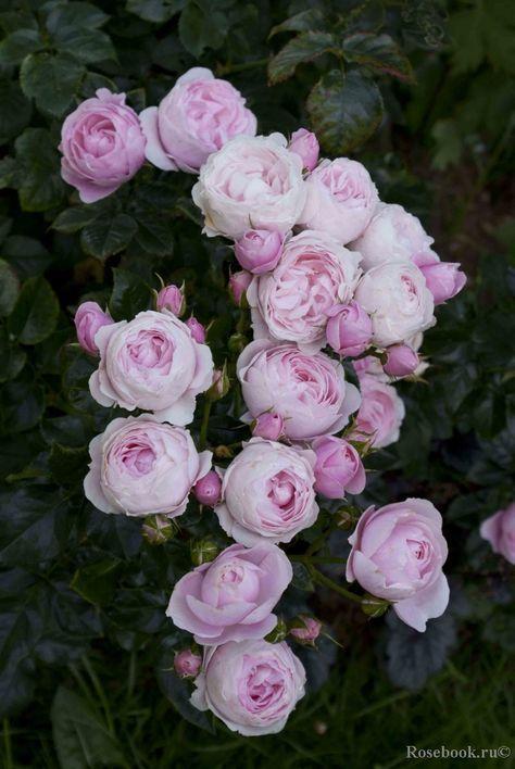 Erfahren Sie Alles Uber Verschiedene Arten Von Blumen Von Rosen Und