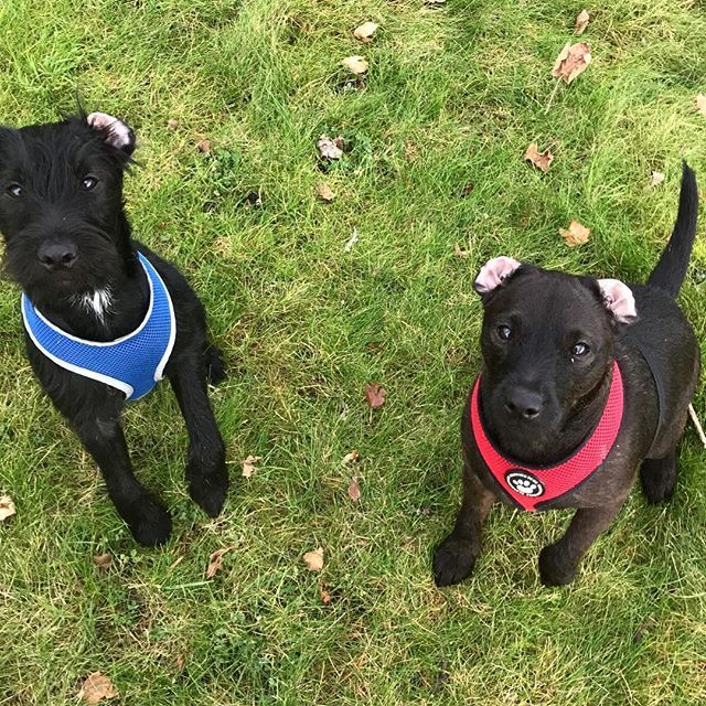Reposting Thepatterdales Double Outside Ear Trouble Zac Zoey