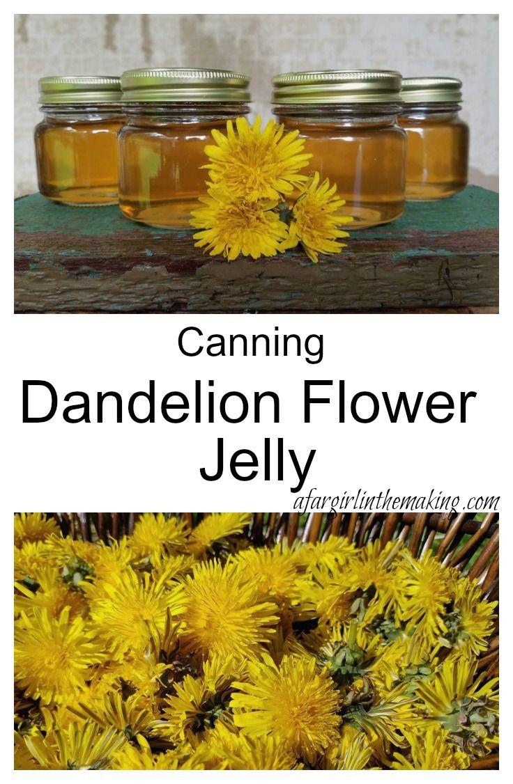 Canning Dandelion Flower Jelly Recipe Dandelion Jelly Canning Recipes Canning