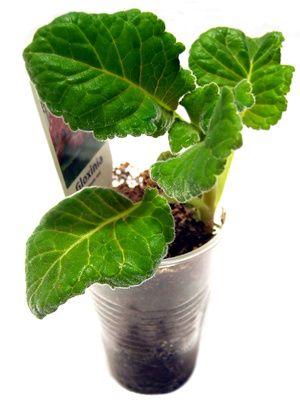 6381da1c0ab9e60fc7a79bb4b3621a8c - Which Plastics Are Safe For Gardening
