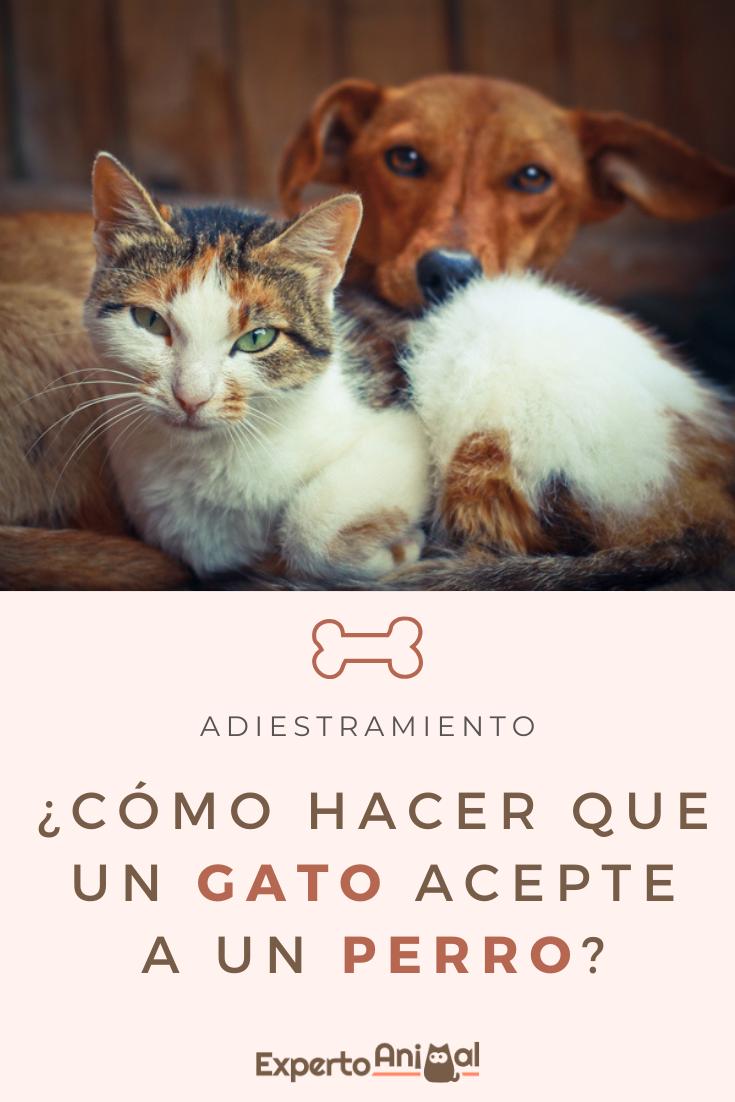 Cómo Hacer Que Un Gato Acepte A Un Perro En 2020 Perros Gatos Perro Gato