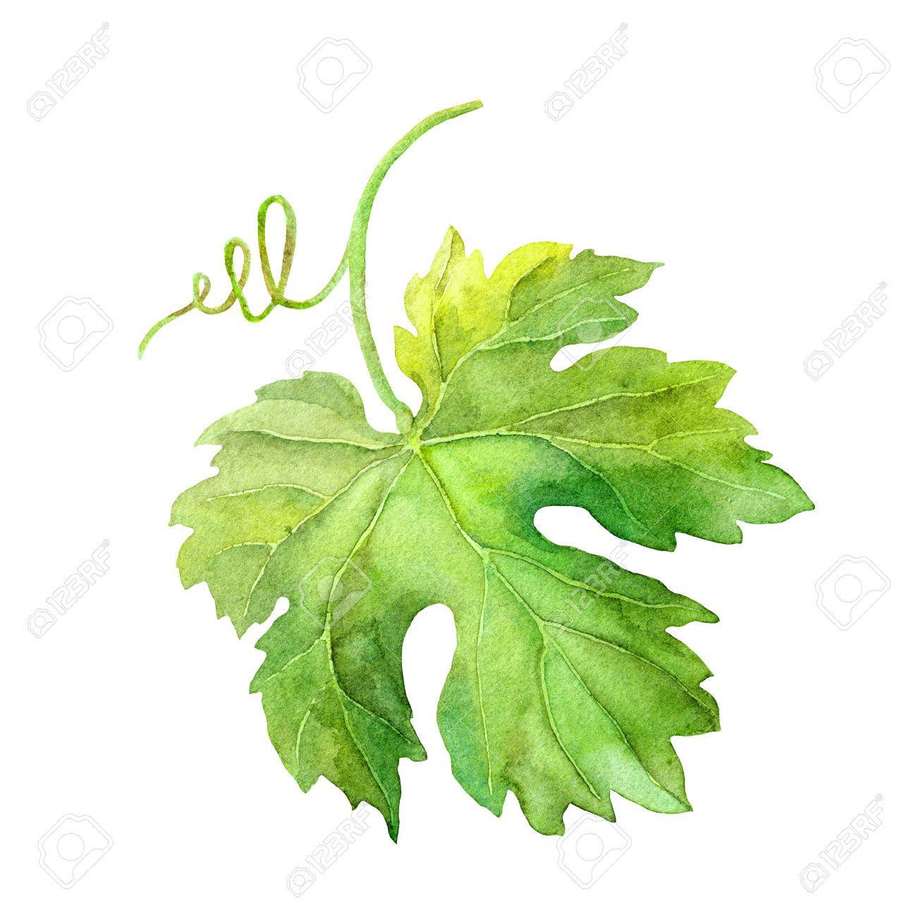 La feuille de vigne dessin francais - Feuille de vigne dessin ...