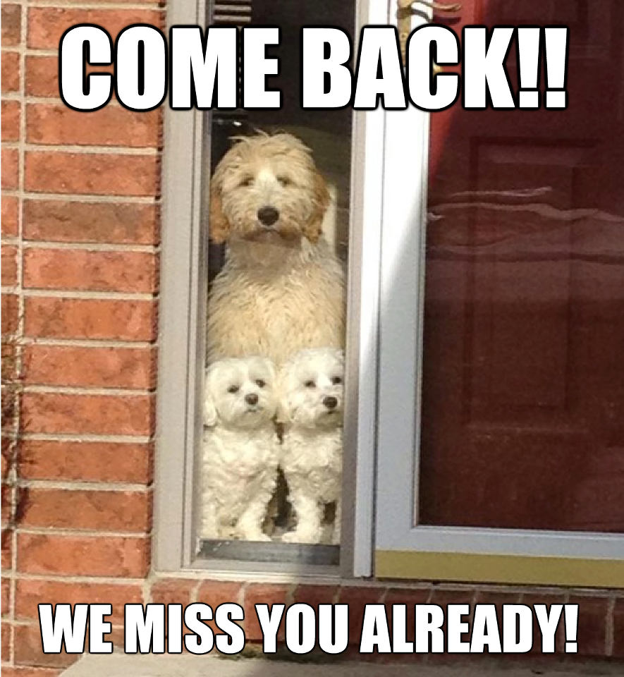 Funny We Miss You Meme : Confessions of a dozy dog come back we miss you