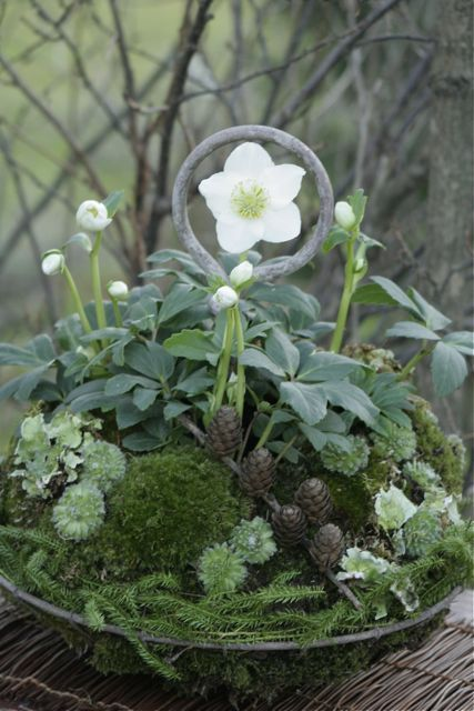 think that the hellebores and moss are planted; then other cute stuff is added for interest.