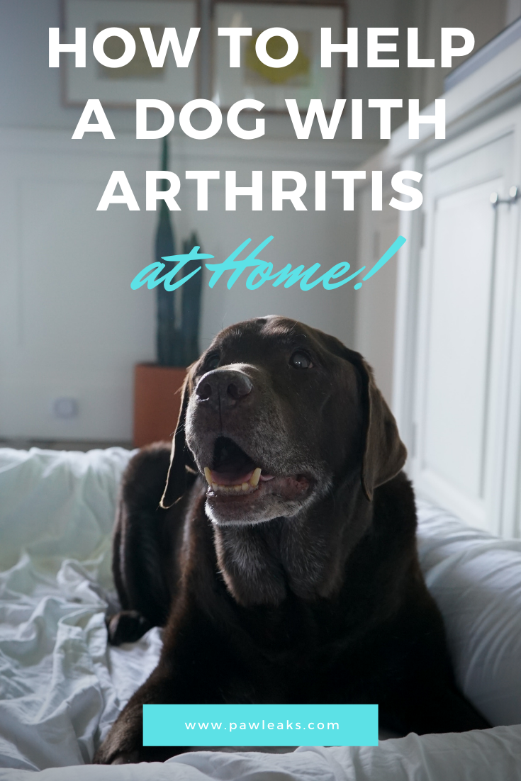 How to Help a Dog With Arthritis at Home Orthopedic dog