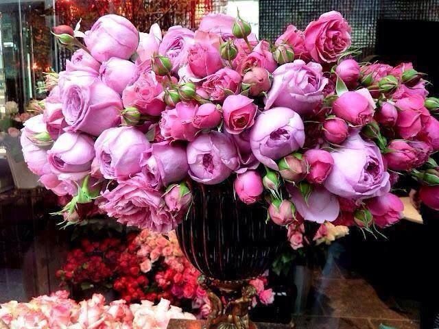 Beautiful Peonies...