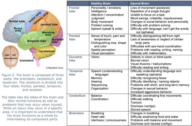 Brain Lobes And Function Chart Figure 2 The Is Composed Of Three Parts Brainstem Cerebellum