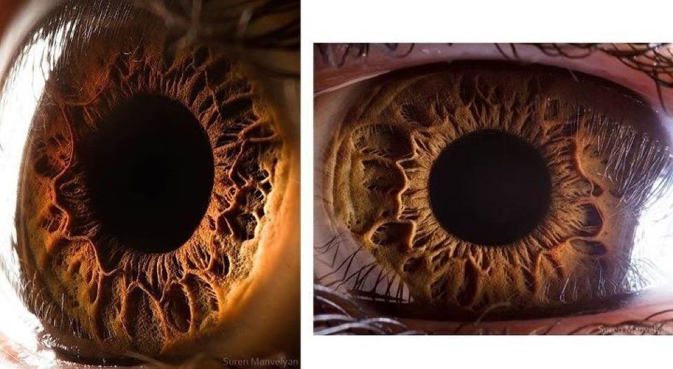 Image Human Eye Diagram Download