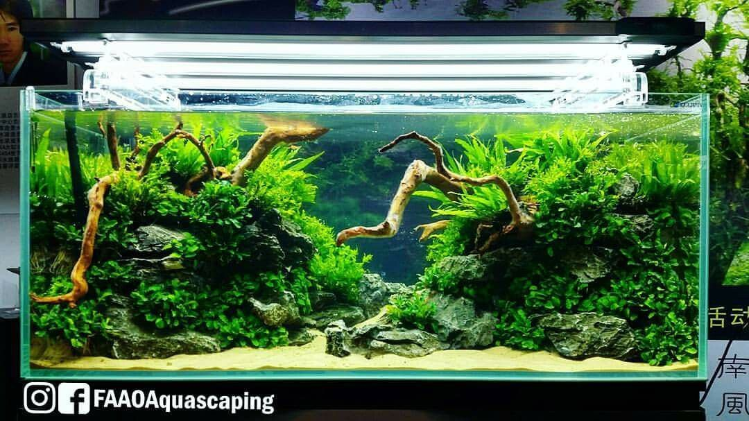 Aquascaping Layouts - Aquascape Ideas
