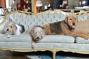 Finnegan, Cleo, and Roxy of Alter'd Relics, a design studio located in Barberton, Ohio.~ Photo Cred: Shane Wynn