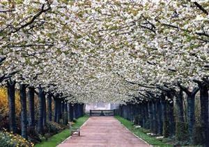 Valloires Abbey Garden; Argoules, France.