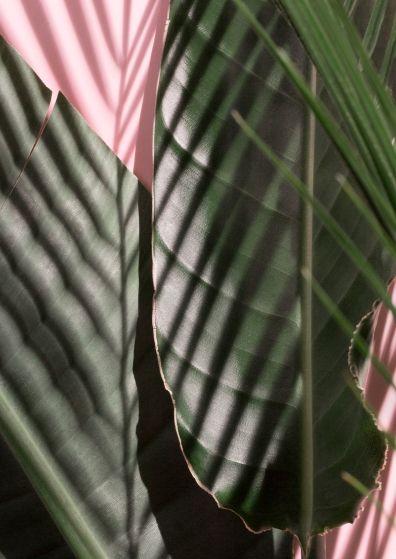 Jules & Jenn - mode responsable en toute transparence // Plants • www.julesjenn.com