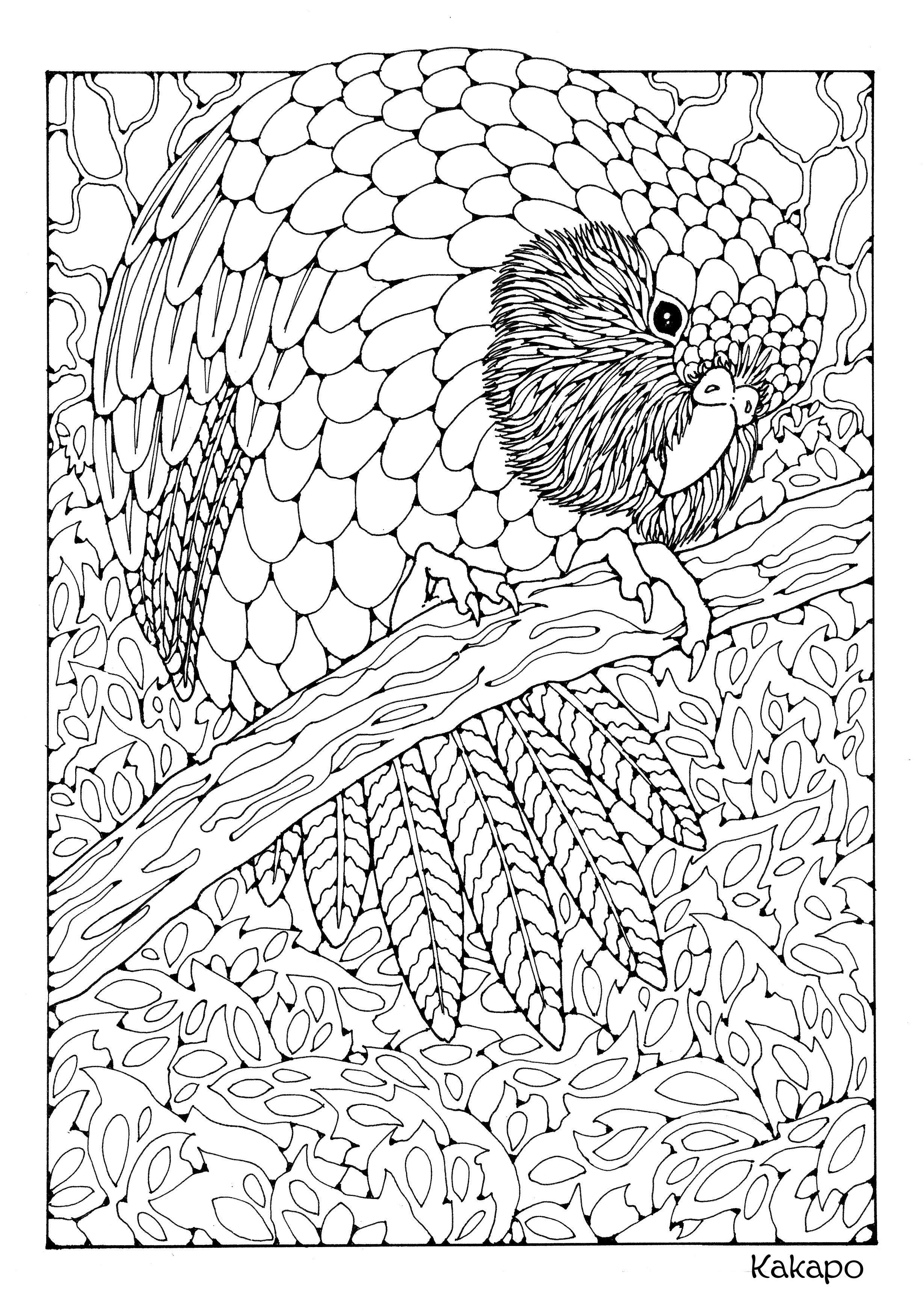 Excelente Pájaros Enojados Para Colorear Páginas Para Niños ...