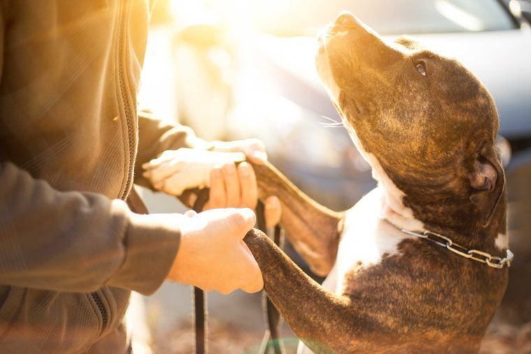 A Goodbye Letter To My Human Dogs Trust Choosing A Dog Low Energy Remedies