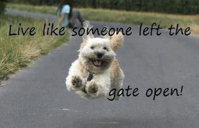 Live like someone left the gate open! I love this one... :)