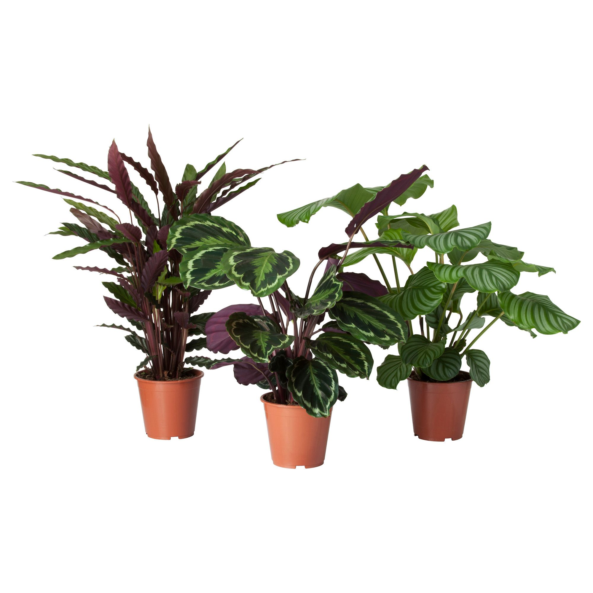 les 25 meilleures id es de la cat gorie matrice unitaire sur pinterest piedestal plante. Black Bedroom Furniture Sets. Home Design Ideas