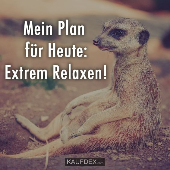 Mein Plan Fur Heute Extrem Relaxen Lustig Super Lustig Und Witze