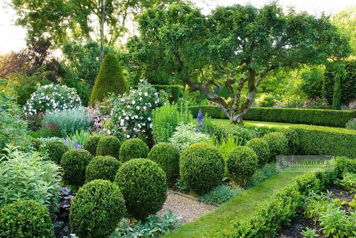 Formal garden with clipped box balls, gravel paths, roses ...