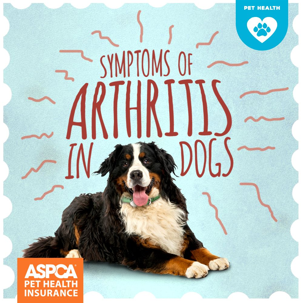 Symptoms Of Arthritis In Dogs Dog Arthritis Canine Arthritis Dogs