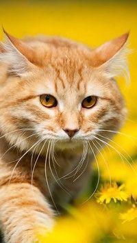 Rudy Kot Na łące Tapety Na Telefon Tapeciarniapl Pinterest