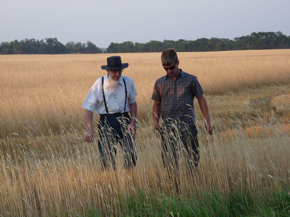 Amish grandpa walking in kansas plains area