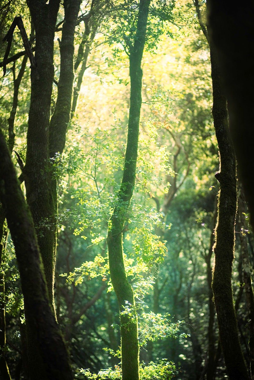 The Divinity of the Forest