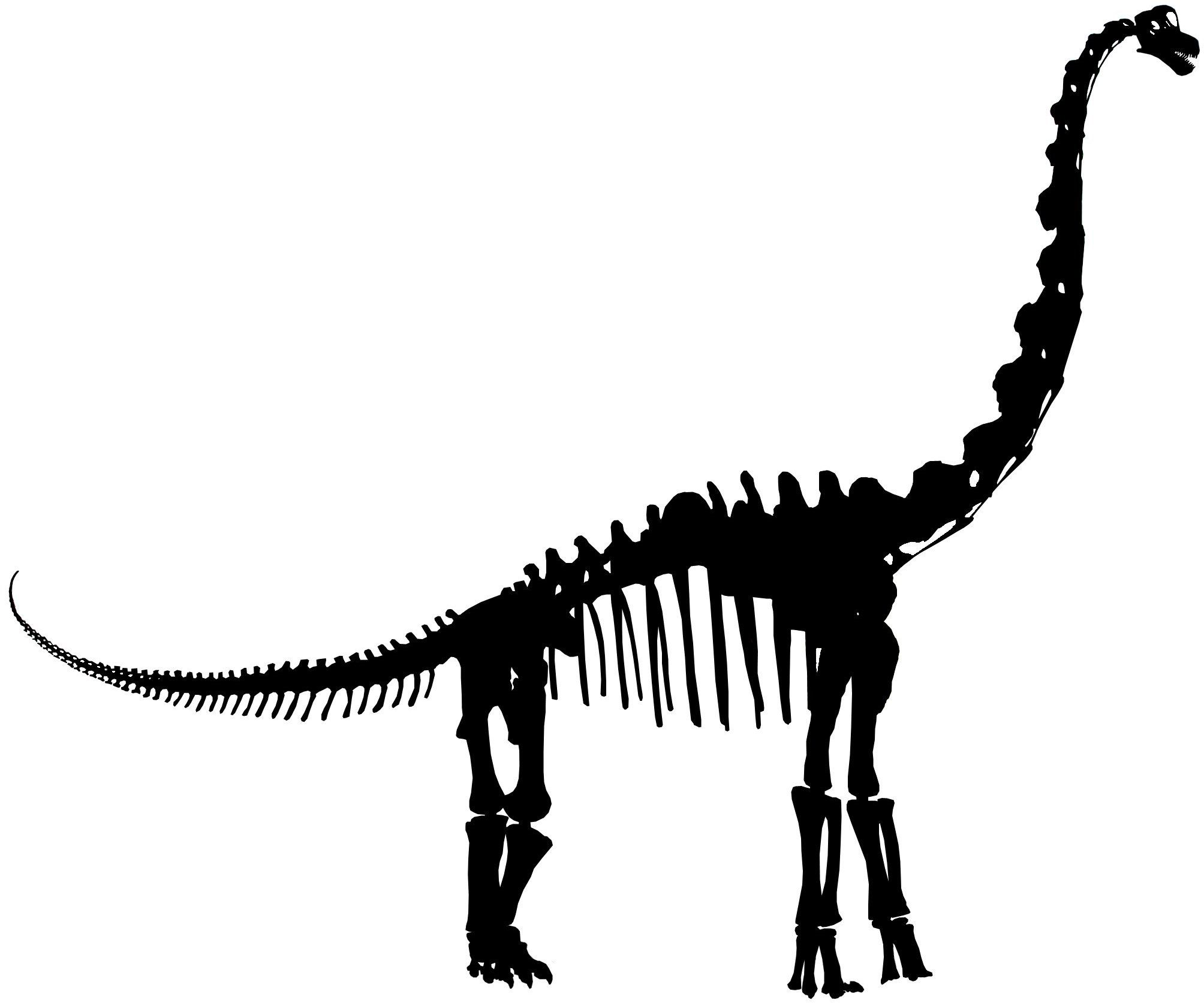 Dinosaur skeleton silhouette google search quilt specific dinosaur skeleton silhouette google search fandeluxe Ebook collections