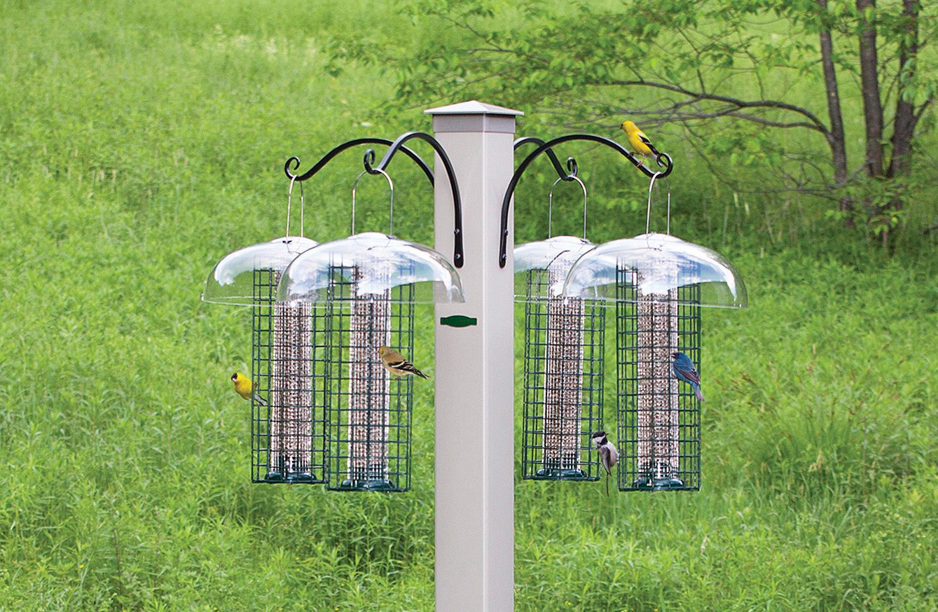 Win Against Squirrels with a Bird Feeding Station | Bird ...