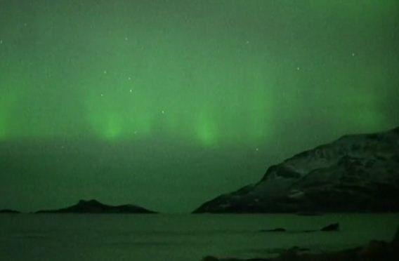 Baleias sob luzes da aurora boreal na Noruega