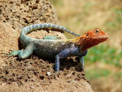 animal that starts with i 10 Remarkable Animals