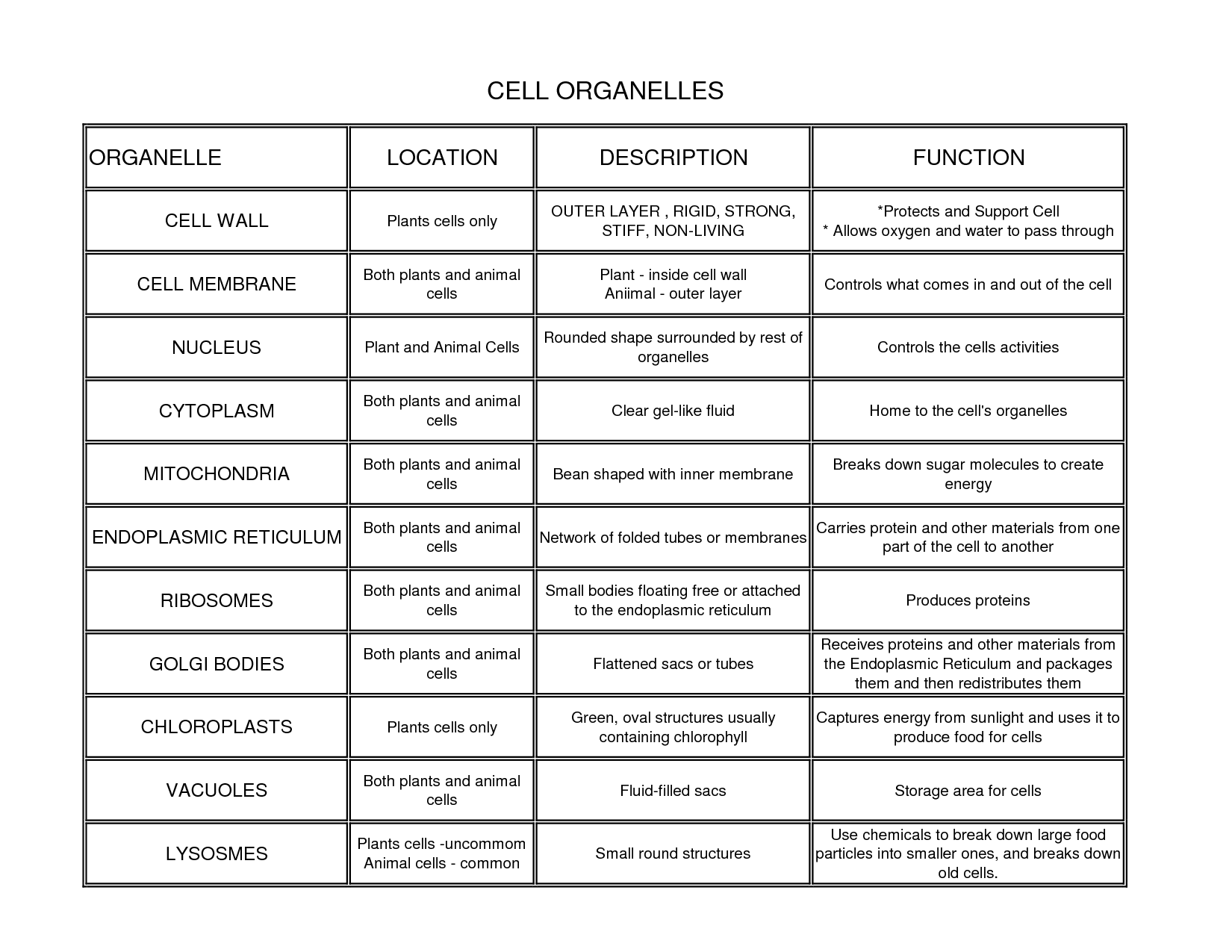 Cell Organelles Locations Description And Functions
