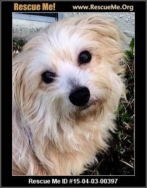 Poncho (male)  Maltese Mix  Age: Young Adult  Health:Neutered, Vaccinations Current  Poncho is a sweet timid boy looking for a quiet home with a friendly dog.   Animal Location:  Honor Animal Rescue 4951 Lorraine Rd Manatee County Bradenton, FL 34211 MAP IT!  Contact: 941-747-4900