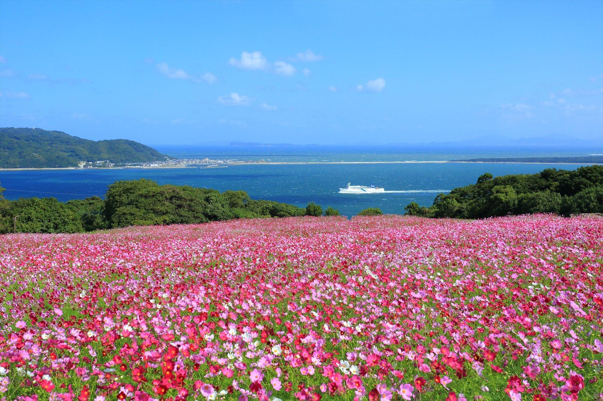 Cosmos By Masahiro Otsuka 500px Scenery Fukuoka Japan Japan Travel