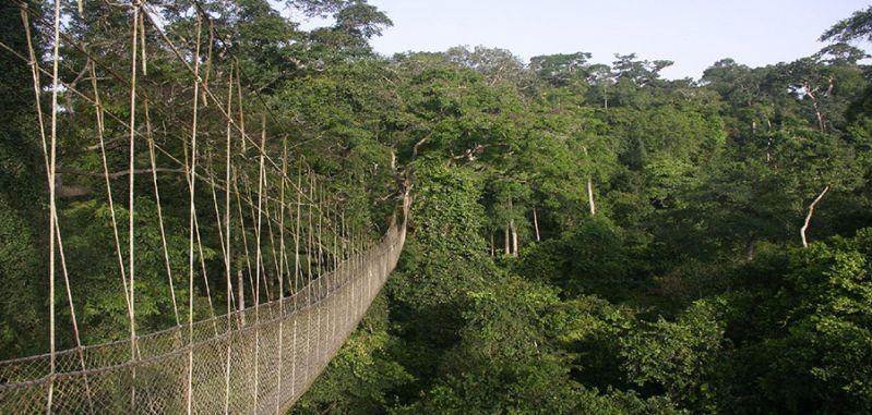 Kakum Canopy Walk Kakum National Park Ghana & Kakum Canopy Walk Kakum National Park Ghana | Bucket list ...