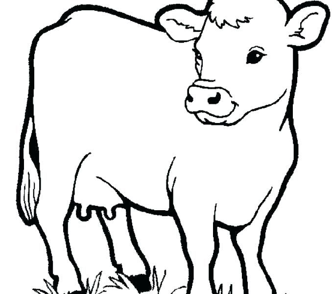 Animal Coloring Pages Preschool Little Cow Farm Animals