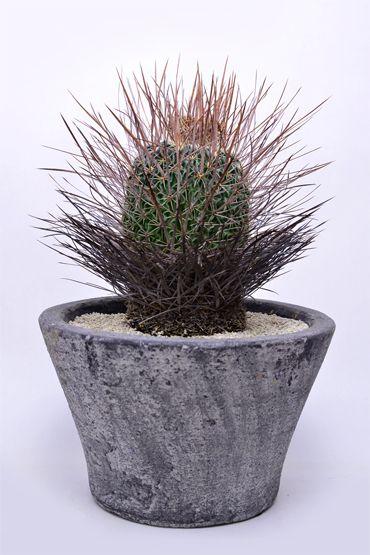Pin Na Rośliny