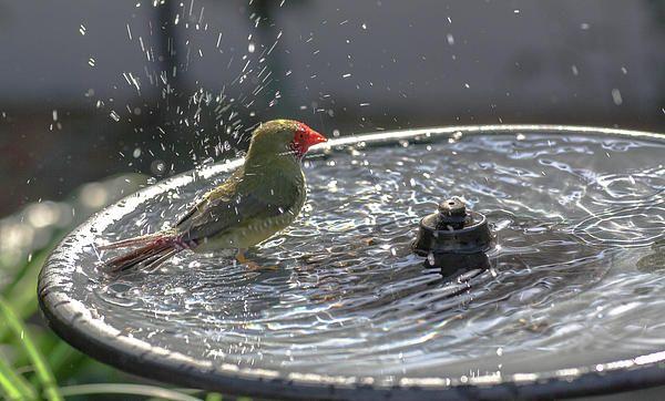 Causing a Splash 1