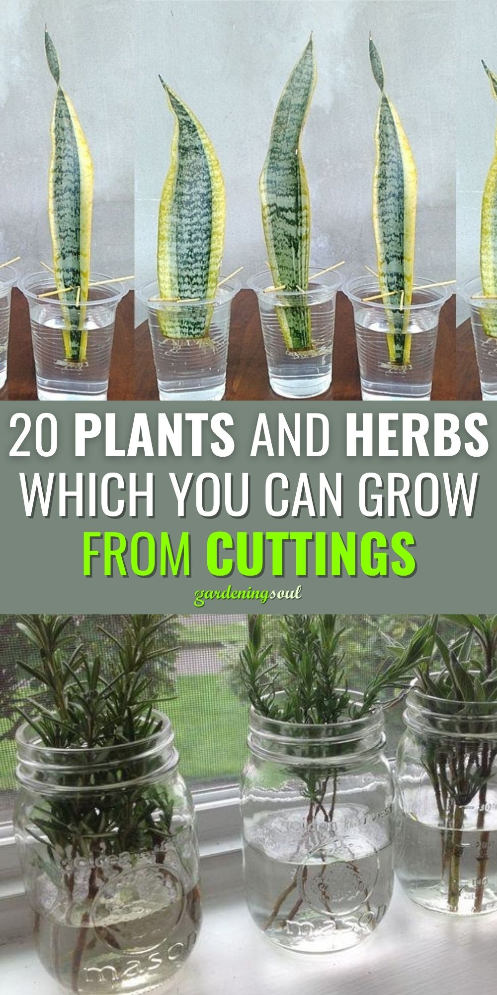 20 Plants And Herbs Which You Can Grow From Cuttin